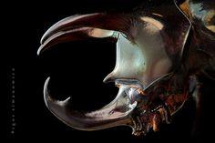 http://3.bp.blogspot.com/_jhf-7wU76qc/THUPgWMkl9I/AAAAAAAABks/3m46PZn9id4/s1600/cool-insect-7.jpg