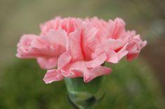 pink pictures for large desktop