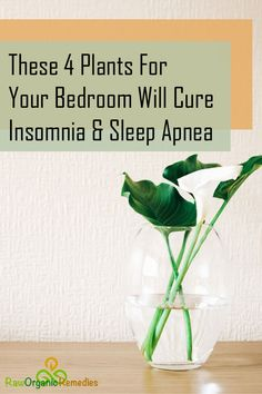 These 4 Plants For Your Bedroom Will Cure Insomnia and Sleep Apnea - Healthiest Center Home Remedies For Snoring, Natural Cough Remedies, Holistic Remedies, Health Remedies, Natural Cures, Herbal Remedies, What Is Sleep Apnea, Cure For Sleep Apnea, Sleep Apnea Remedies