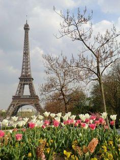 Torre Eiffel by @SakuraCha_n