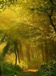 Beautiful tree photography scenery pathways ideas for 2019 Foto Nature, All Nature, Nature Source, Flowers Nature, Beautiful World, Beautiful Places, Beautiful Pictures, Beautiful Forest, Nature Pictures