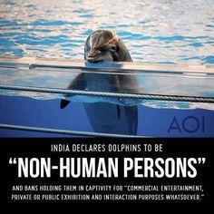 """L'Inde déclare les dauphins """"personnes non-humaines"""" et interdit de les montrer en spectable."""