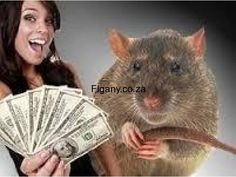 SPIRITUAL money Rats and short boys for {hire} to bring you money same day in S.A areas Johannesburg - Figany South Africa, Classifieds, Free Classifieds, Online Classifieds Luck Spells, Magic Spells, Curse Spells, Bring Back Lost Lover, Bring It On, Native Healer, Powerful Money Spells, Revenge Spells, Lost Love Spells