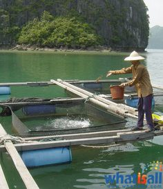 What is Aquaculture? it is a kind of farming done for the aquatic species like fishes, shellfishes, and aquatic plants. This kind of farming involves species from both freshwater and marine water. A similar kind of farming, however done in natural habitats is Mariculture, albeit different from aquaculture.