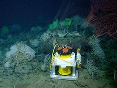 Equipment placed on the seafloor measures currents flowing over the top of Davidson Seamount.