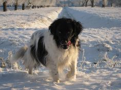 Friese Stabij - Happy Raya in the snow!