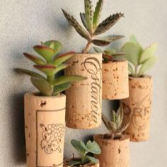 Clever idea.... Put magnets on the back for a fridge garden?