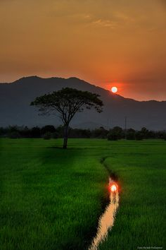 Sunset at rice field Beautiful Landscape Wallpaper, Beautiful Landscape Photography, Beautiful Landscapes, Nature Images, Nature Pictures, Beautiful Pictures, Village Photography, Moon Photography, Village Photos