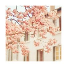 blossom 500x500 Bookmarks #1094506 - Picture For Me ❤ liked on Polyvore featuring backgrounds, pictures, flowers, photos and pics