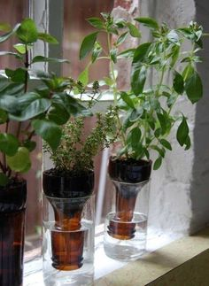 A no-fuss recycled windowsill herb garden. Self-watering planters like these aren't a new idea. This version looks nice & works great for small herbs and plants. Empty beer bottles or make a larger garden with wine bottles. Herb Garden In Kitchen, Kitchen Herbs, Garden Farm, Garden Web, Gravel Garden, Beer Garden, Vegetable Garden, Vegetable Planters, Gardening Vegetables