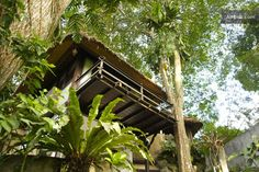 Tree house, Bali