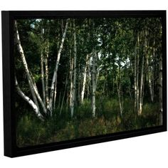 ArtWall Kevin Calkins Birch Grove in Sunlight Gallery-Wrapped Floater-Framed Canvas, Size: 16 x 24, Brown