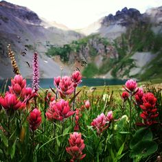 Colorado wildflowers at clear lake near Silverton. Taken by:  ______ www.coloradojunkie.com