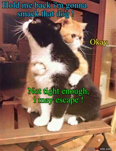 funny-animals-17 funny animal pictures pictures funny Animals