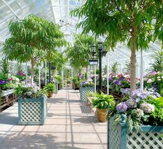 Free admission to the conservatory and Seattle Asian Art Museum during the first Thursday of each month! Another reason to love Spring in Seattle!  #Seattle  #VolunteerPark  #SAAM  #Spring  #Conservatory by dr.searchin