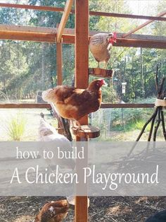 Simple DIY Chicken Coop Projects Tips; Clarifying Significant Elements For Building Chicken Coop - Readeary Joseph Cute Chickens, Raising Backyard Chickens, Urban Chickens, Keeping Chickens, Chickens In Garden, Diy Toys For Chickens, Treats For Chickens, Dust Bath For Chickens, Plants For Chickens