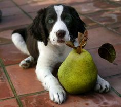 #1 – Apples (minus the core) An apple a day keeps the veterinarian away? This may be true, apples contain antioxidants that help boost immunity. Plus they're sweet… dogs love the sweet. Just be sure to throw out the core since …