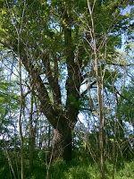 Gombamánia: Az utolsók Trunks, Plants, Drift Wood, Tree Trunks, Plant, Planets