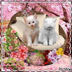 Cute Baby Cats, Cute Cats And Kittens, Kittens Cutest, Cute Babies, Sweet Dreams Pictures, Unicorn Wallpaper Cute, Good Evening Wishes, Good Morning Animation, Good Morning Images Flowers