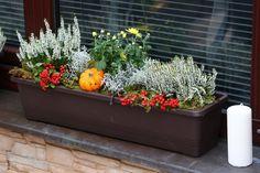 Osázené truhlíky můžete dekorovat různými přízdobami, které dokreslí panující roční období. Garden Deco, Balcony Garden, Container Plants, Container Gardening, Green Windows, Fall Planters, Christmas Porch, Hello Autumn, Thanksgiving Decorations