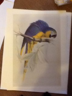 Edward Lear Macaw blue and yellow.