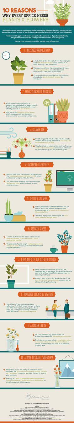 10 Ways Office Plants Improve Productivity [Infographic] | Lifehacker Australia