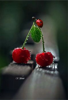 Cherry Always in my heart.🐾💖 Cherry Always in my heart. Fruit And Veg, Fresh Fruit, Photo Coccinelle, Instagram Png, Cherry Kitchen, Fruit Photography, Fruit Painting, Sweet Cherries, Red Aesthetic