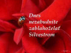 Silvester je príťažlivý - Zaujímavosti - SkolskyServis.TERAZ.sk
