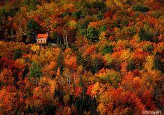 Autumn in Quebec, Canada by Sylvain Mayer