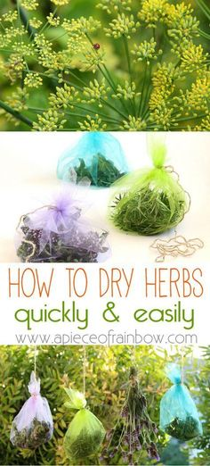 A super fun and effective way of how to dry herbs easily, and fashionably too! It\'s also a great way to save garden seeds, and attract fairies! - A Piece Of Rainbow