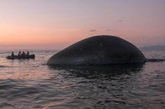 As incríveis imagens de uma baleia de 23 metros encalhada na Indonésia - GreenMe.com.br Conservation, Mammals, Whale, City, Beach, Top News, Seo Tips, Wednesday, Youtube