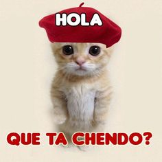 Morning Thoughts, Good Morning, Spanish Greetings, Always Remember You, Cat Stickers, Bts Wallpaper, Special Day, Funny Quotes, Teddy Bear