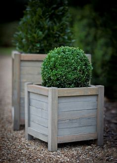 Topiary is a fabulous garden addition, especially in winter