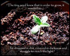 Grow Weed Quotes | Marijuana Seedling Pics | Struggle Is Part Of The Story Quotes | Grow Your Own Weed Memes Grow, change, and reach for the light with delight like every cannabis seed that ends up enriching a stoner's life. Embrace the struggle because it's part of the story and will be your pride. […] More   The post Grow Weed Quotes Cannabis Seeds Struggle To Reach The Light Quote appeared first on Weed Memes.   #ClassicStoner #GrowMarijuana #Featured #HappyCannabisSeeds #GrowWeedMemes