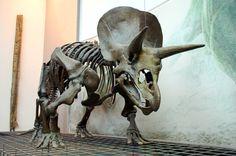 triceratops SKELETON - Google Search