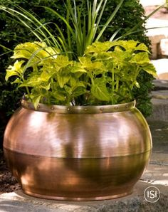 The simple round shape of this outdoor copper planter is accented with a decorative brass band with copper rivets. The smaller size is perfect for an herb garden, while the larger size is great for outdoor container gardening.