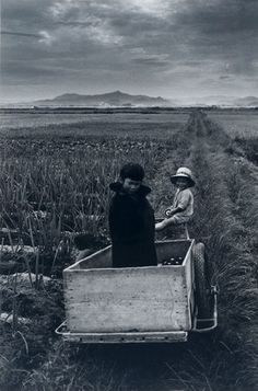 Shoji Ueda. Japanese farm kids. Vintage black and white photograph.