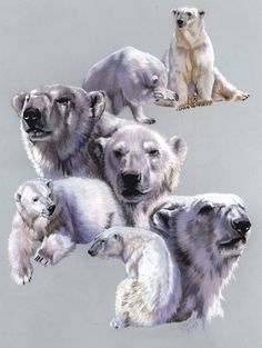 Barbara Keith 'Arctic King' Canvas Art in. W x 47 in. H), Blue Wildlife Paintings, Wildlife Art, Polar Bear Illustration, Polar Bear Tattoo, Summer Art Projects, Wolf Artwork, Traditional Artwork, Guache, Bear Art
