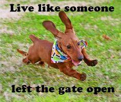 Underdog is a Dachshund Funny Dachshund, Dachshund Love, Funny Dogs, Cute Dogs, Funny Animals, Cute Animals, Daschund, Chiweenie Puppies, Dachshund Quotes