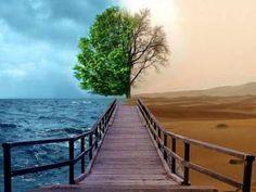 Humor de Leoa: Felicidade x Depressão x Infelicidade - parte I