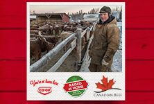 Your local Co-op is proud to support local ranchers. Meet three ranch families from Western Canada in Raised at Home, a three-part series from Co-op and Canada Beef. See how Co-op works with producers to bring quality Western Canadian beef to your table. www.raisedathome.ca/ - Saskatchewan Western Canada, Support Local, Raising, Ranch, Families, Bring It On, Meet, Baseball Cards, Table