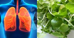 Fantástico! Depure as suas vias respiratórias e pulmões com esta receita fácil! - # #limparospulmões
