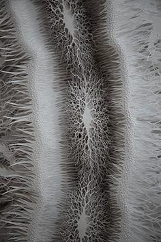Cut Microbe Detail