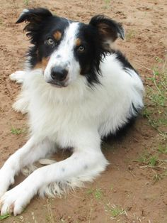 Milo at Dogs Trust