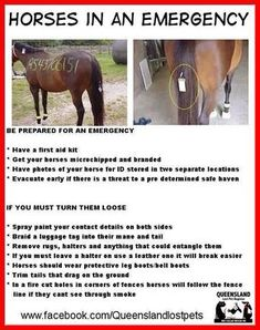 What to do with horses in an emergency just in case My Horse, Horse Love, Hunter Jumper, Horse Information, Horse Care Tips, Horse Facts, All About Horses, Horse Quotes, Horse Training