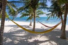 I could lay here forever: Hammocks under the palm trees as Casa Rosa vacation rental home on Tankah Bay