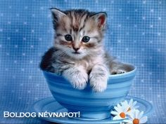 Pictures Of Cute Kittens Wallpapers Wallpapers) – Adorable Wallpapers Cute Kittens, Fluffy Kittens, Kitten Baby, Kitten Gif, Kitten Videos, Kitten Cartoon, Cool Cats, Gatos Cool, Cute Cat Wallpaper