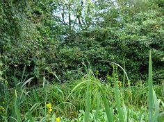 Overgrown mess which was my garden