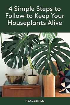 4 Very Simple Steps to Keep Your Houseplants Alive