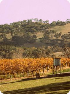 Adelaide Hills, South Australia